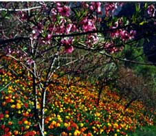 iran , shiraz , delgosha garden